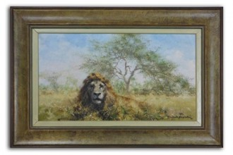 David Shepherd Male Lion